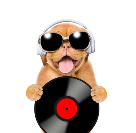 Funny puppy with vinyl record, earphones and sunglasses looks at camera. Isolated on white background.