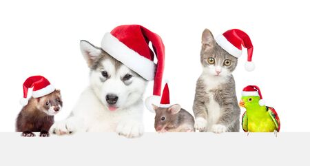 Big group of the pets wearing a red christmas hats above white banner. Empty space for text. Isolated on white background.