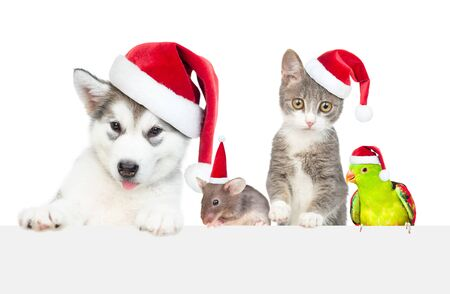 Group of the pets wearing a red christmas hats above empty white banner. Empty space for text. Isolated on white background.
