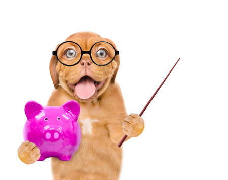 Funny puppy  wearing a eyeglasses holds piggy bank and points away on empty space. Isolated on white background.