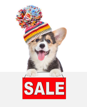 Corgi puppy wearing a warm hat holds sales symbol above empty banner. isolated on white background.