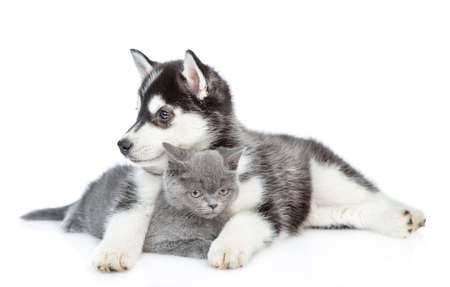 Siberian Husky puppy hugs british kitten and looks away. isolated on white background. Reklamní fotografie
