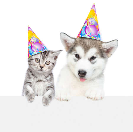 Kitten and alaskan malamute puppy wearing a birthday hats look above empty banner. isolated on white background.