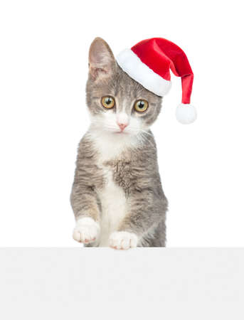 Cat wearing a red christmas hat looks above empty white banner. Empty space for text. isolated on white background. 写真素材 - 151126133