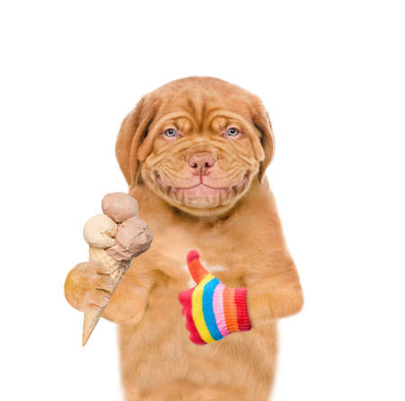 Smiling puppy holding ice cream and showing thumbs up. isolated on white background.