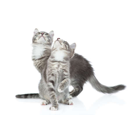 Group of cats look up together. isolated on white background. Imagens