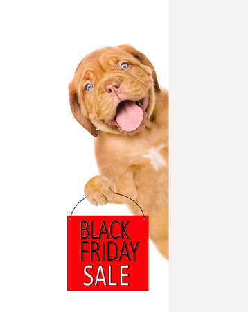 Happy puppy holds shopping bag with black friday text behind empty white banner. isolated on white background.