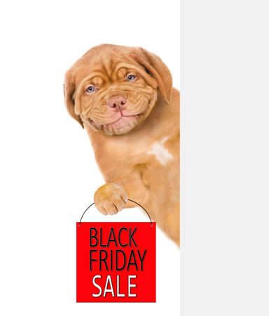 Smiling puppy holds shopping bag with black friday text behind empty white banner. isolated on white background. Imagens