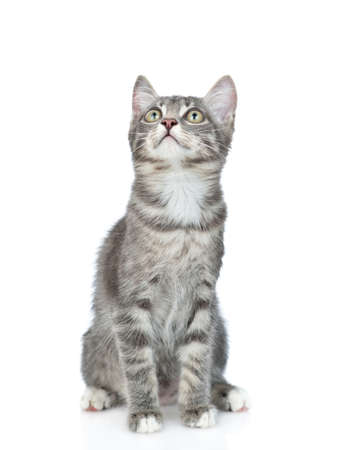 Cat sitting in front view and looks up. isolated on white background. Imagens