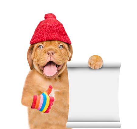 Smiling puppy wearing a warm hat with pompon shows empty list and thumbs up gesture. isolated on white background.