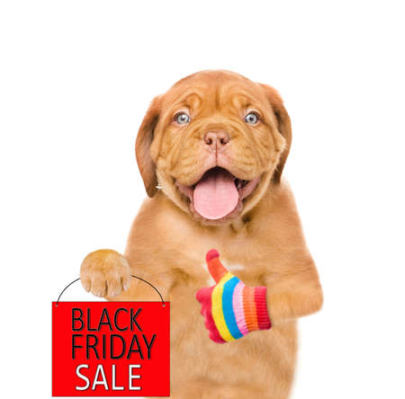 Funny dog holds shopping bag with black friday text and shows thumbs up gesture. isolated on white background.