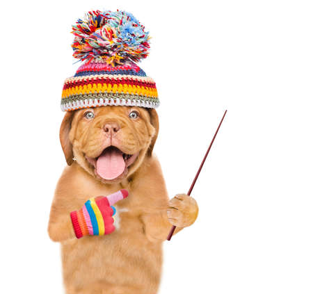 Happy dog wearing a warm hat holds a pointing stick and pointing away on empty space. isolated on white background. Imagens