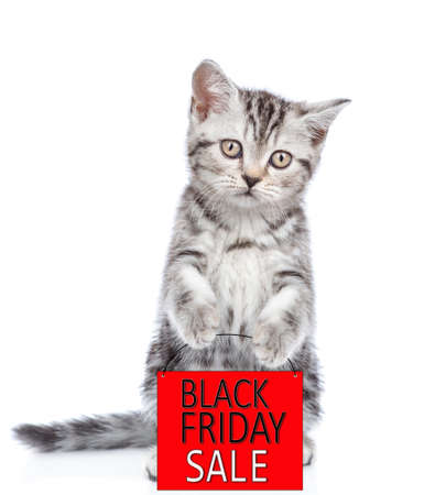 Tabby cat holds shopping bag with black friday text and looks at camera. isolated on white background. Imagens