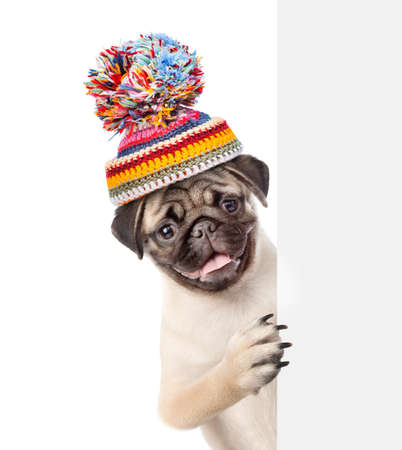 Pug puppy wearing a warm hat looks behind empty board. isolated on white background.