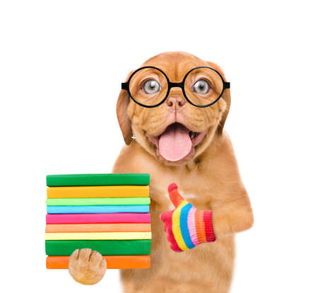 Funny dog with eyeglasses holds a books and shows thumbs up gesture. isolated on white background. Imagens