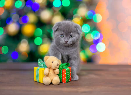 Funny baby kitten sits with gift boxes and toy bear with Christmas tree on background. Imagens
