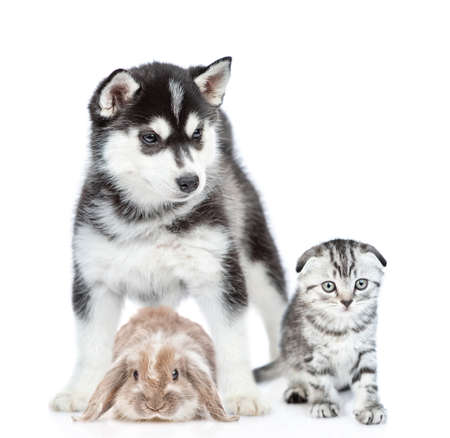Group of pets - rabbit,cat and dog sit together in front view. Isolated on white background. Imagens