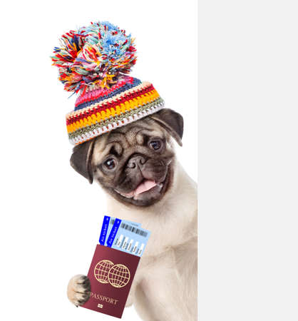 Happy puppy wearing a warm hat holds airline tickets and passport behind empty white banner. isolated on white background.