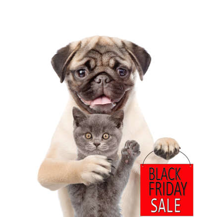Pug puppy hugs kitten and holds shopping bag with black friday text. isolated on white background. Imagens