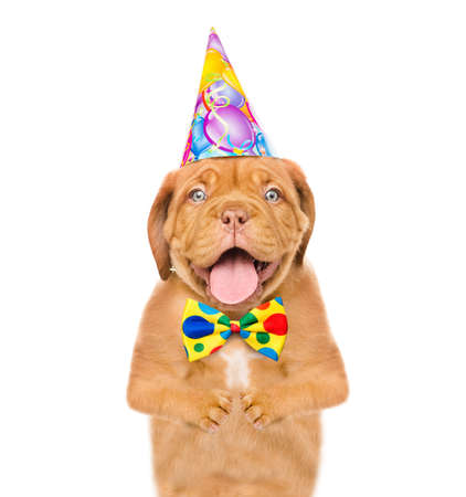 Happy puppy wearing a birthday hat above white banner. isolated on white background.