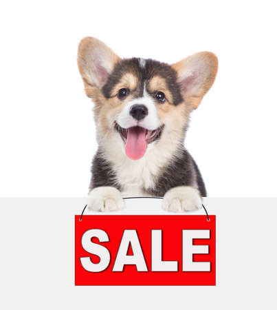 Corgi puppy holds sales symbol above empty white banner. isolated on white background.