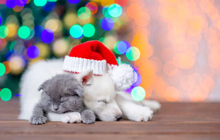White siberian husky wearing a red santa hat hugs sleepy baby kitten on a background of the Christmas tree. Empty space for text.