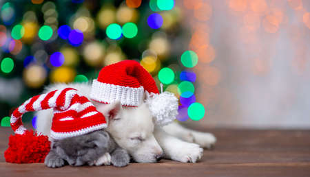 White siberian husky and baby kitten wearing funny hats sleep on a background of the Christmas tree. Empty space for text.