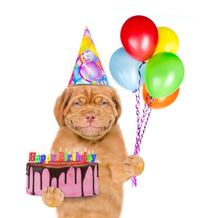 Smiling puppy wearing a party hat holds balloons and birthday cake with many burning candles. isolated on white background.