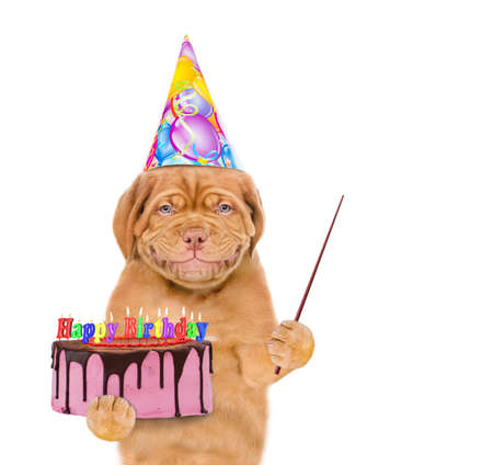 Smiling puppy wearing a party hat holds cake and points away on empty space. isolated on white background.