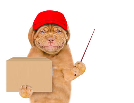 Smiling puppy wearing a red cap holds big box and points away on empty space. isolated on white background.