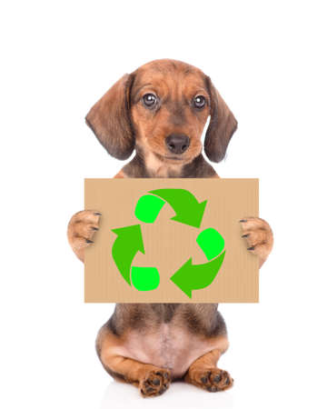 Dachshund puppy holds placard with recycling symbol. Eco concept. isolated on white background. Imagens