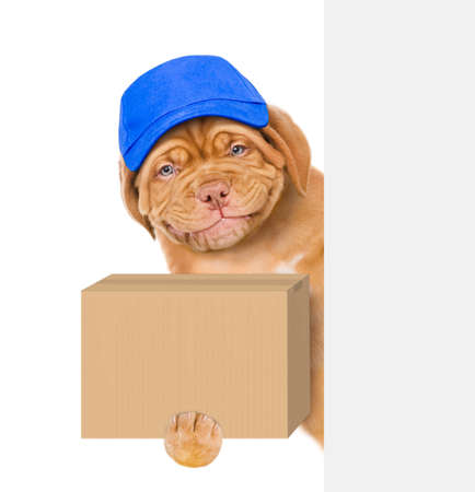 Smiling puppy wearing a blue cap holds big box and looks from behind empty banner. isolated on white background.