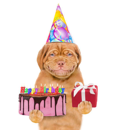 Funny puppy wearing a party hat holds gift box and birthday cake with many burning candles. isolated on white background.