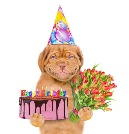 Smiling puppy wearing a party hat holds birthday cake and flowers. isolated on white background.