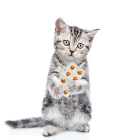 Kitten stands on hind legs, holds pills and looks at camera. isolated on white background.