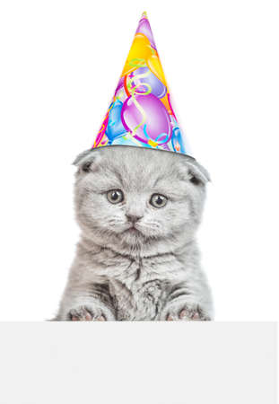 Kitten wearing a party hat looks above empty white banner. Isolated on white background.