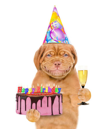 Smiling puppy wearing a party hat holds glass of champagne and birthday cake with many burning candles. isolated on white background.