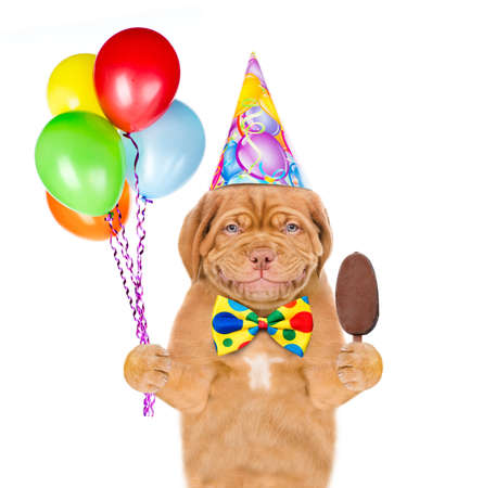 Smiling puppy wearing a prty hat holds balloons and eating ice cream. isolated on white background. Imagens