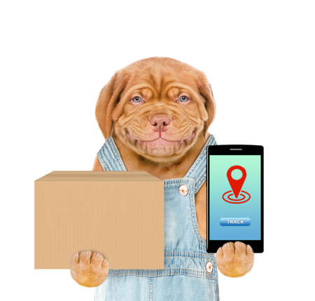 Smiling puppy holds smartphone and big box. isolated on white background. Imagens