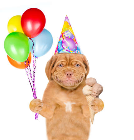 Smiling puppy wearing a birthday hat holds balloons and ice cream. isolated on white background. Imagens