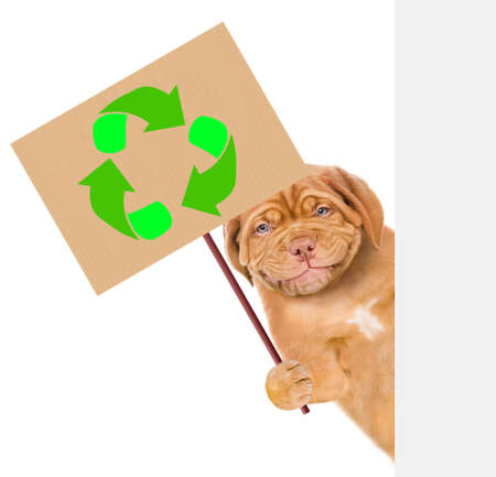 Smiling puppy behind white banner holds placard with recycling symbol. Eco concept. isolated on white background. Imagens