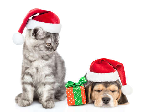 Cat wearing a santa hat looks at a sleepy beagle puppy with a gift.