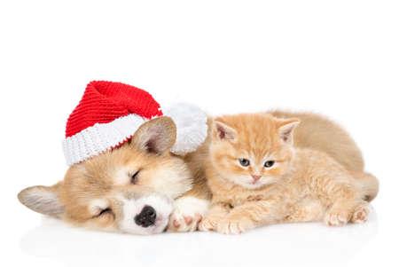 Corgi puppy wearing acred christmas hat sleeps with tiny kitten. isolated on white background.