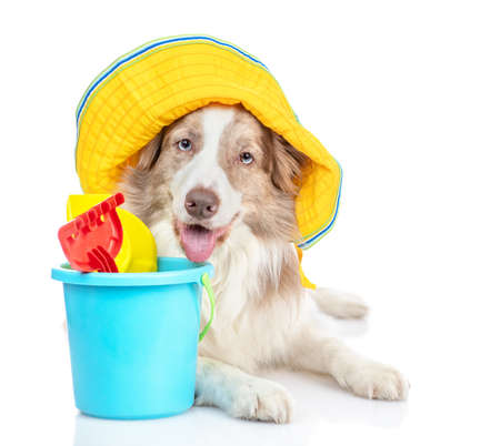 Border collie dog wearing a summer hat ready for play on summer beach. isolated on white background.