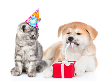 Cat wearing a birthday hat looks at akita inu puppy who is untying a gift box ribbon. isolated on white background. Imagens