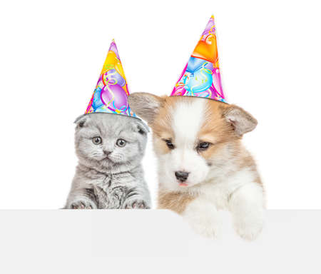 Kitten and pembroke welsh corgi puppy wearing birthday hats look above empty banner. isolated on white background.