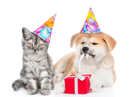 Cat wearing a birthday hat sits with akita inu puppy who is untying a gift box ribbon. isolated on white background. Imagens