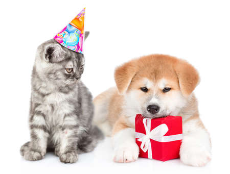 Cat wearing a birthday hat sits with akita inu puppy who is hugs a gift box. isolated on white background.