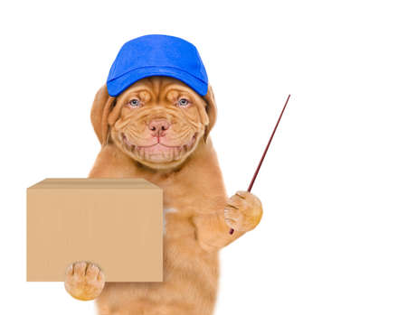Smiling puppy wearing a blue cap holds big box and points away on empty space. isolated on white background.