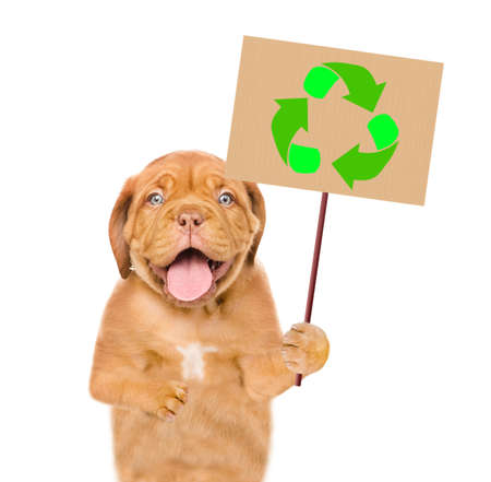 Puppy holds placard with recycling symbol. Eco concept. Isolated on white background.